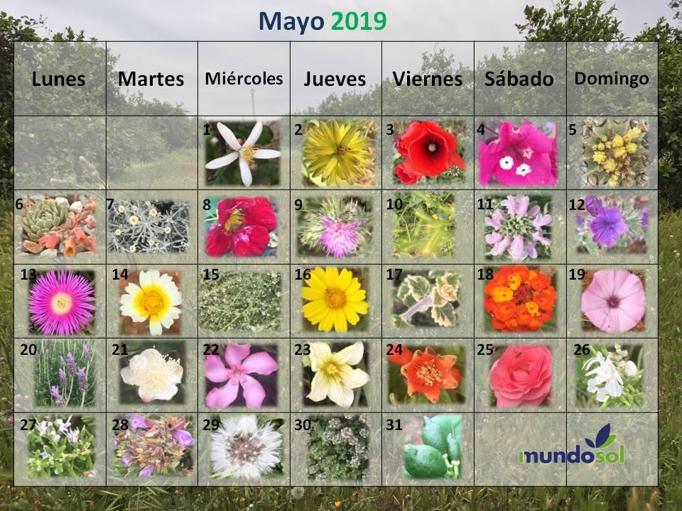 Mes de las flores en Mundosol Quality